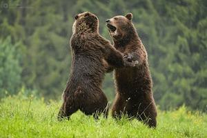România Sălbatică ajunge în aproape 40 de orașe în a doua săptămână de la lansare
